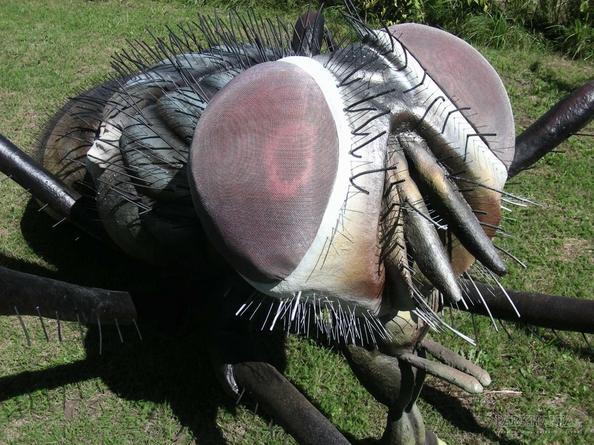 Produkcja gigantycznych owadów może być pasją: rozmowa z Tomaszem Wagnerem