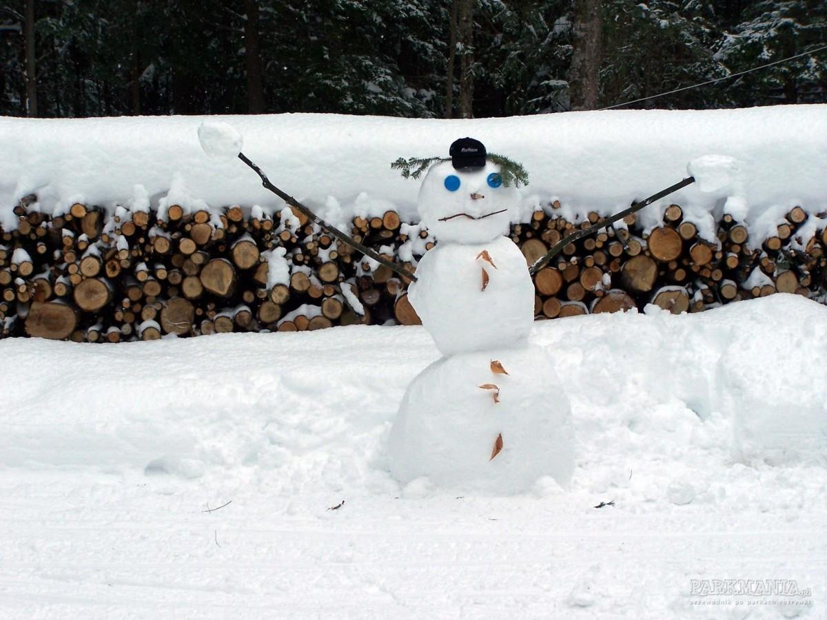 Zimowy park rozrywki w twoim ogrodzie