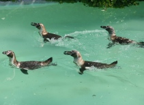 Penguin Cove, Otters & Reindeer