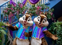 Chip 'n Dale Treehouse