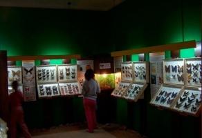 Muzeum Motyli Władysławowo rabat