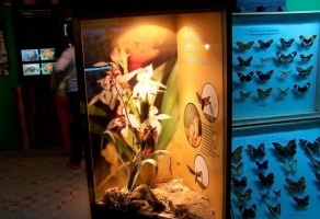 Muzeum Motyli Łeba rabat