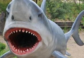 Ocean Park  rabat